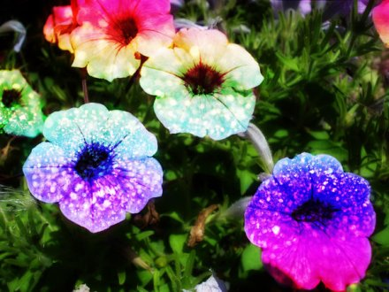 wpid-Rainbow_Glitter_Flowers_by_ih8m0r0nz.jpg